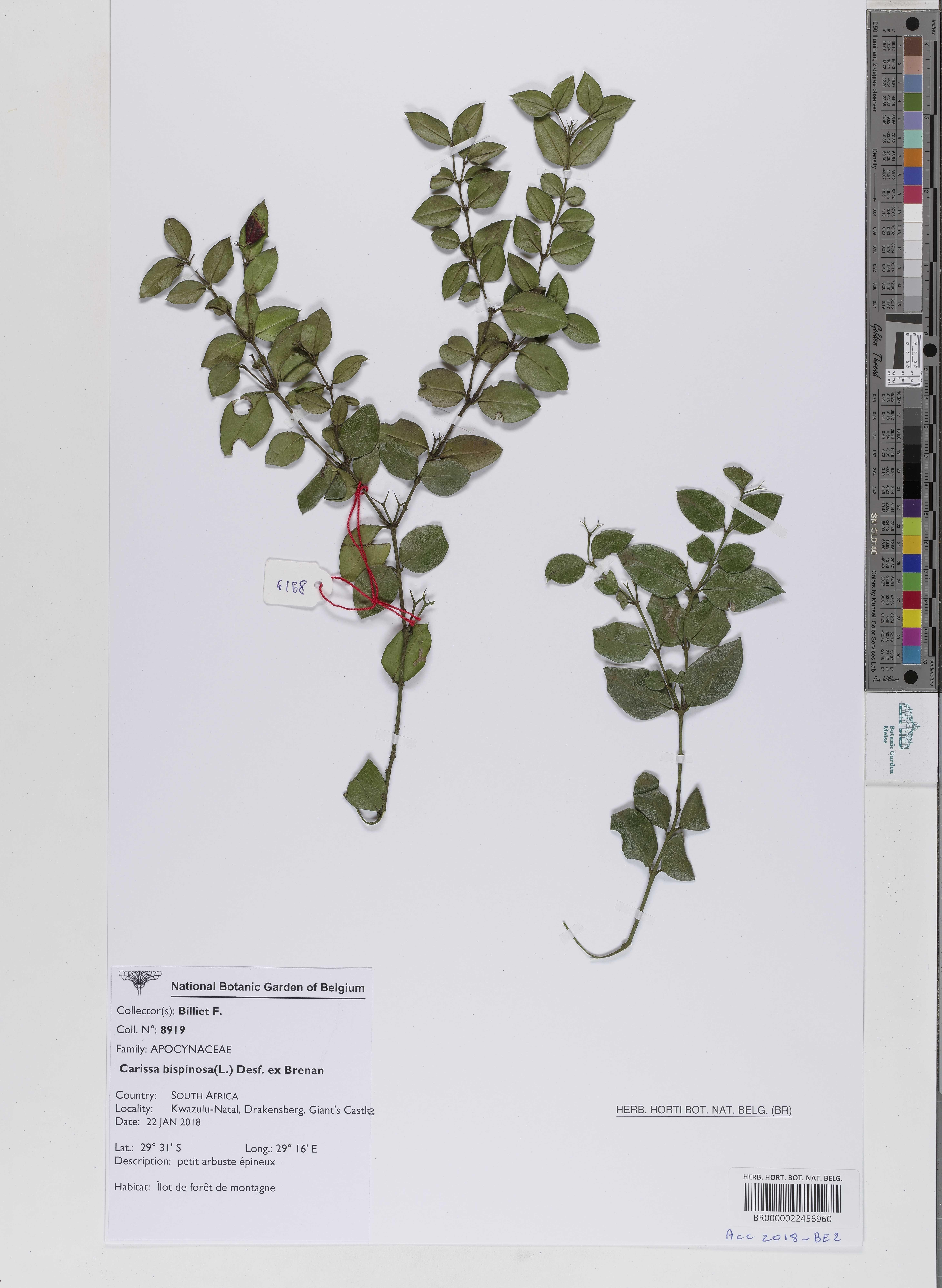 image/jpeg Meise Botanic Garden